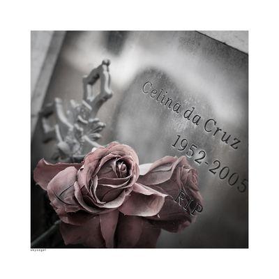 Cemitério-dos-Prazeres 7