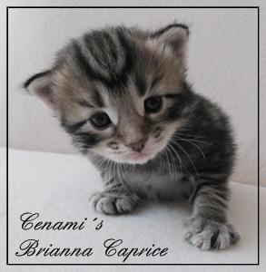 Cenami´s Brianna Caprice 1