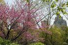 Central Park au Printemps 1