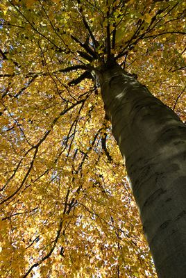 Centre de l'automne