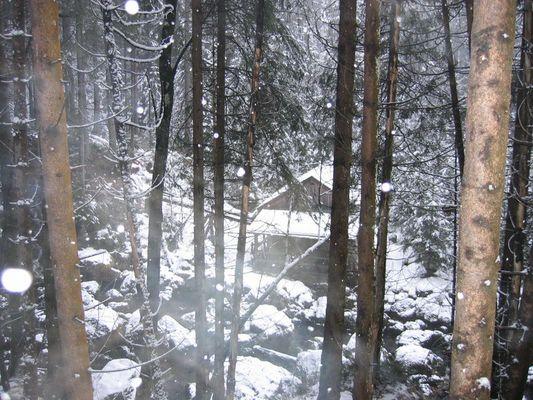 c'era una volta...in una foresta incantata...