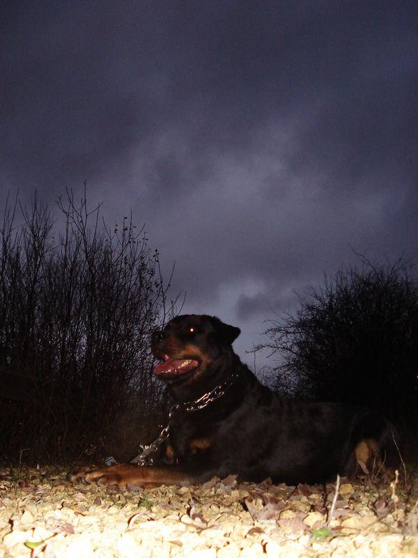 Cerburus der Nacht