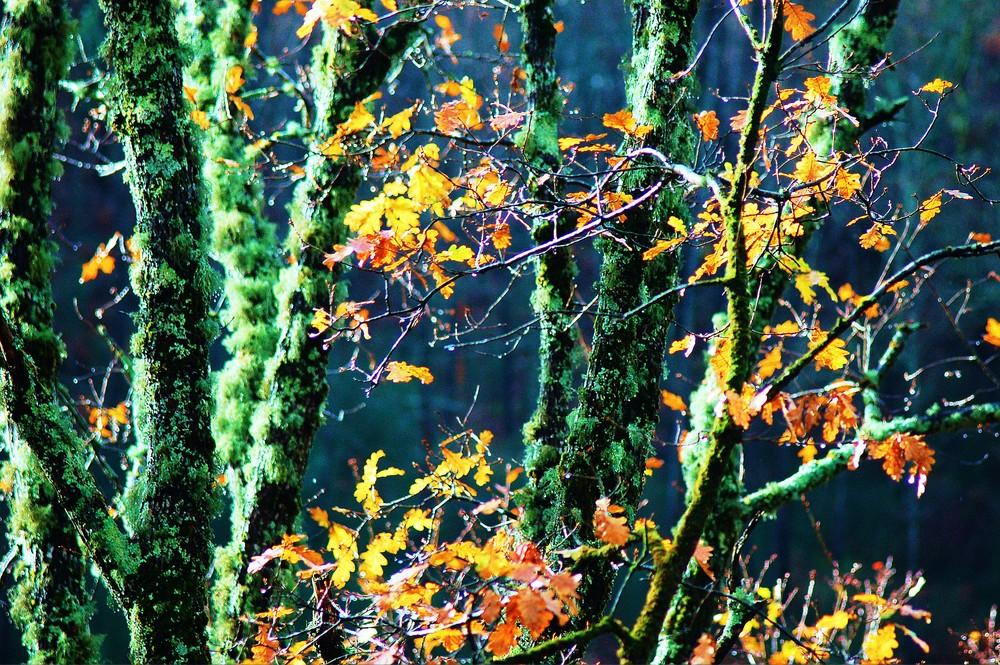 cerdedo en otoño