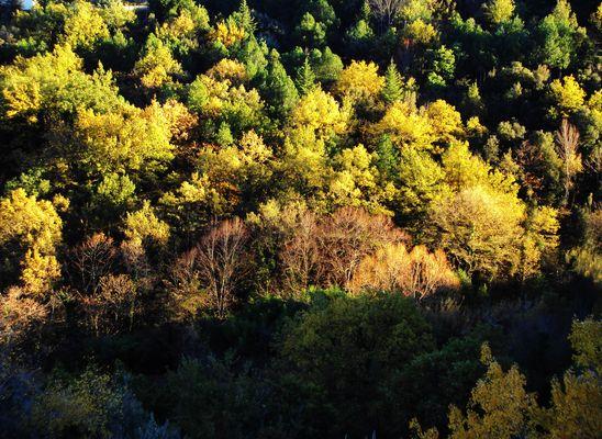 ceret en automne