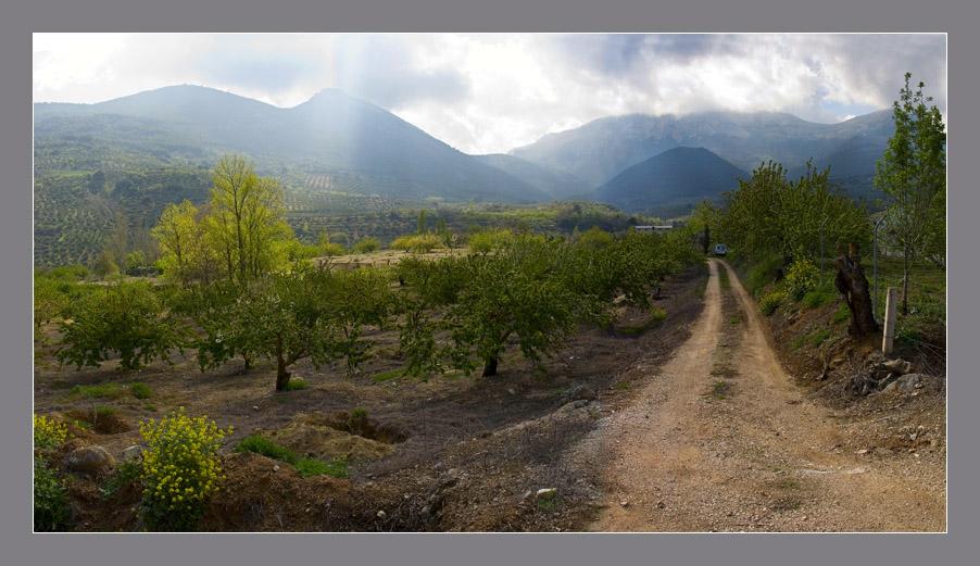 Cerezos en Sierra Mágina