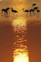 Cervia - riserva naturale