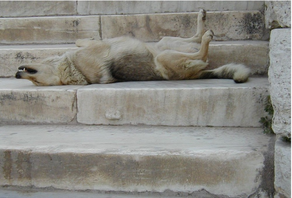 Ces escaliers m'ont épuisé, je dors!!!