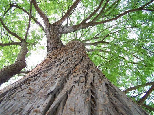 C'est au pied de l'arbre qu'on voit le mieux l'arbre