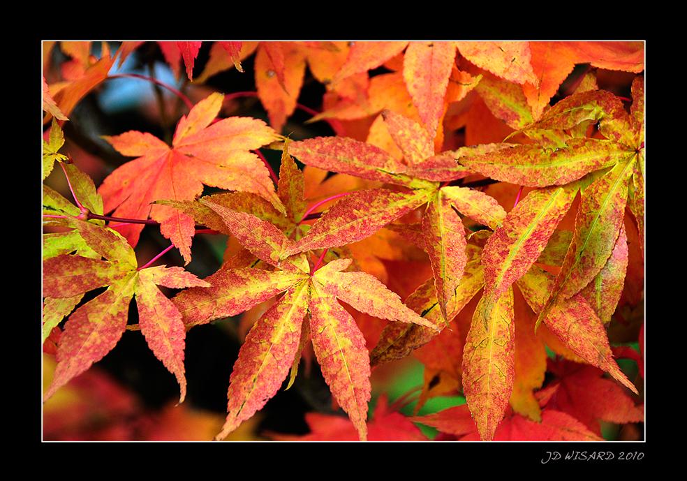 ....C'est bien l'automne !!!....