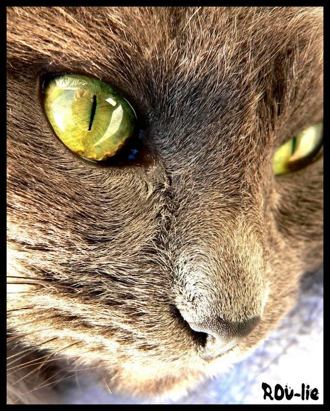 C'est incroyable comme les chats sont feignants...