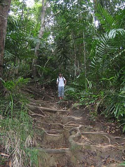C'est la jungle ici !