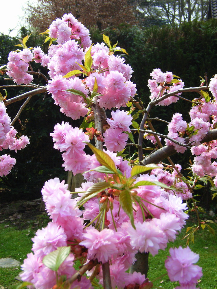 C'est le printemps, bonjour, bonjour les hirondelles ...