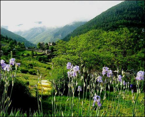 C'est le printemps dans les gorges du Tarn .