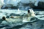 C'est l'fun les bains d'glace !