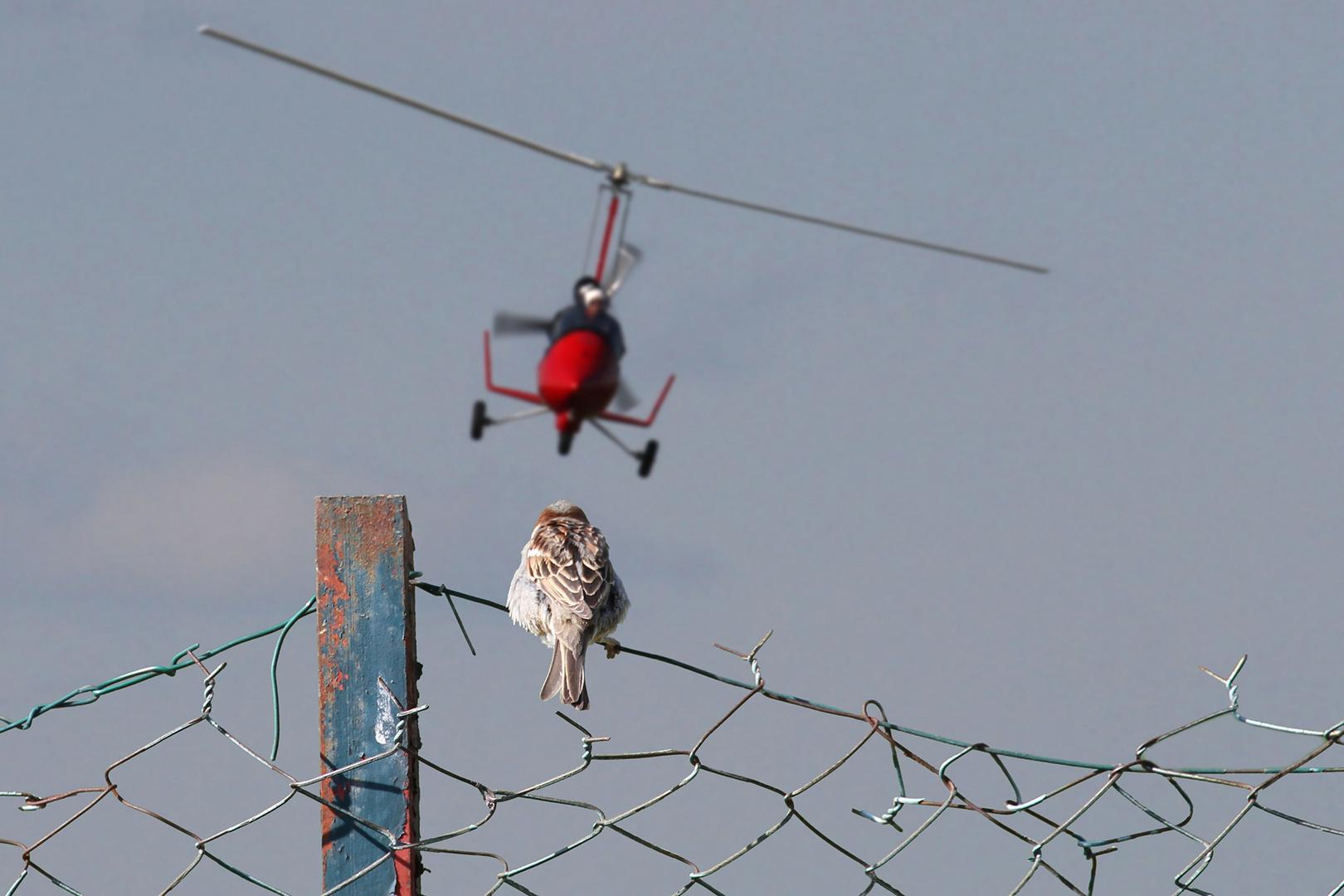 C'est l'histoire d'un moineau qui regardait passer les avions... et rêvait de voler