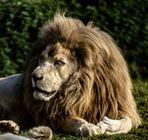 c'est moi le roi!