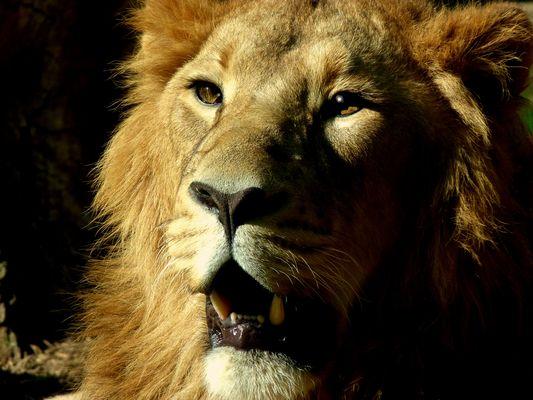 c'est moi siba c'est moi le roi du royaume animal