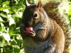C'est mon raisin qu'il mange !