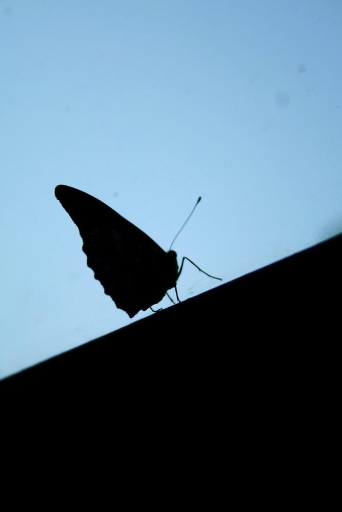 C'est Un petit papillon ...