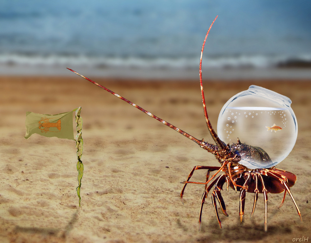 """""""C'est un petit pas pour la langouste, mais un bond de géant pour les crustacés !"""""""