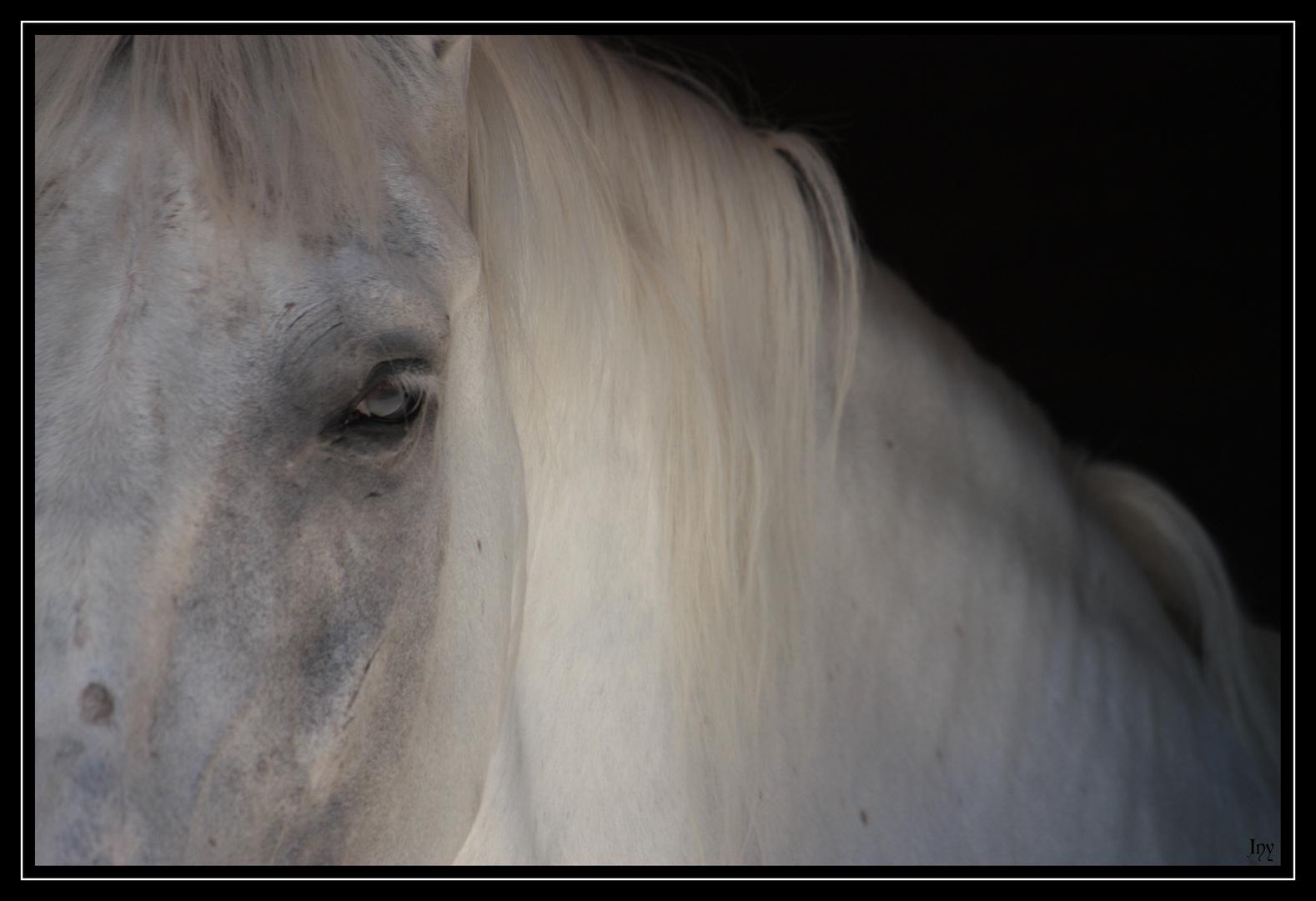 C'était un cheval blanc...
