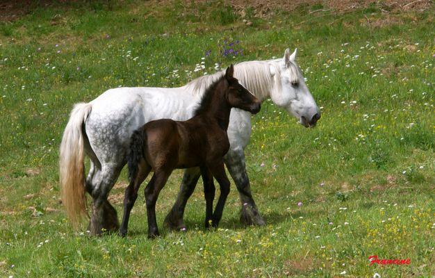 C'était un cheval blanc ...