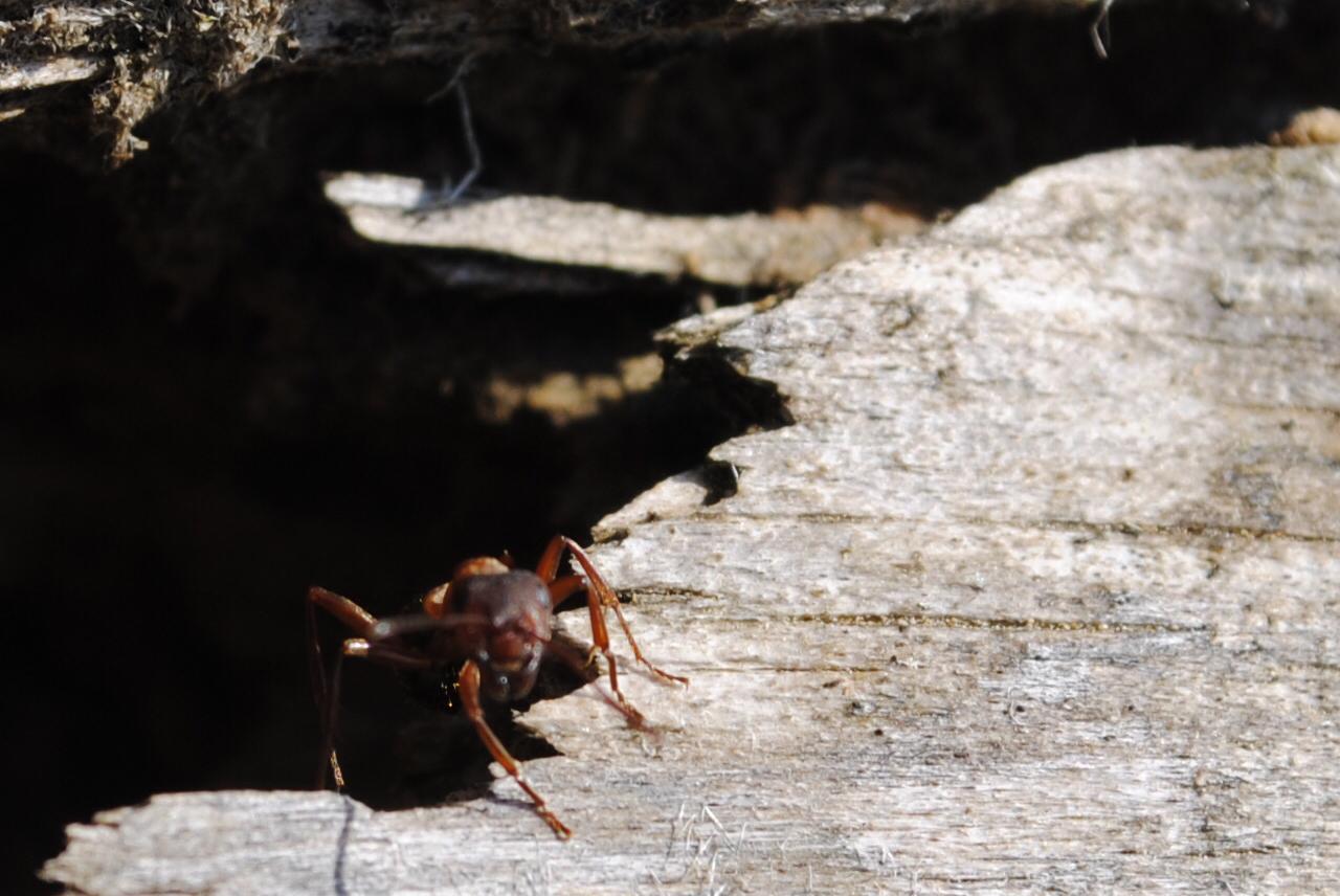 Cette fourmi, malgrès sa tête de Clown, ne me fait pas beaucoup rire.