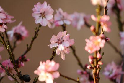 Piante, fiori e funghi