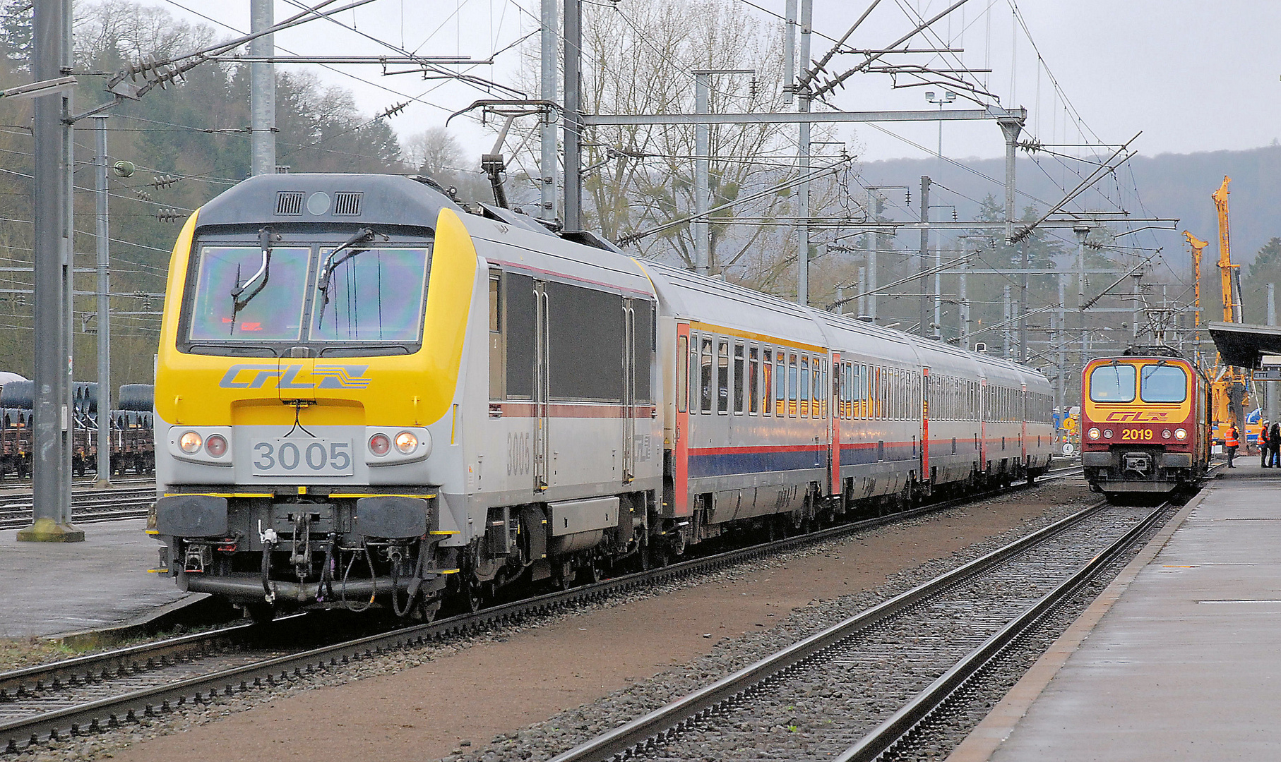 CFL 3005