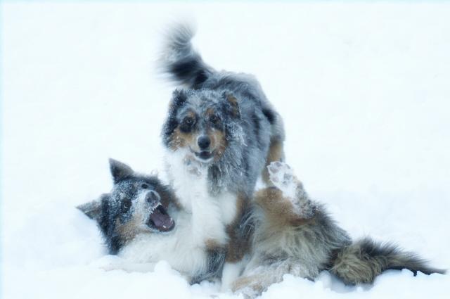 Chacky und Tinkerbell