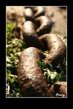 Chain_Faible_2