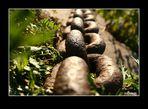 Chain_Faible_3