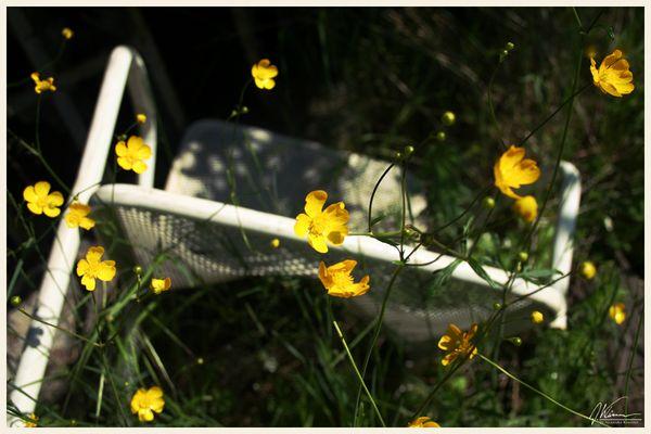 chairflowers