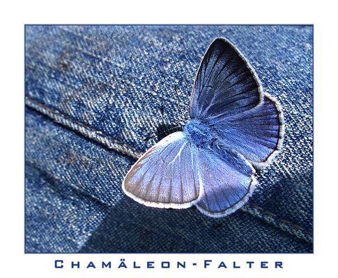 Chamäleon-Falter