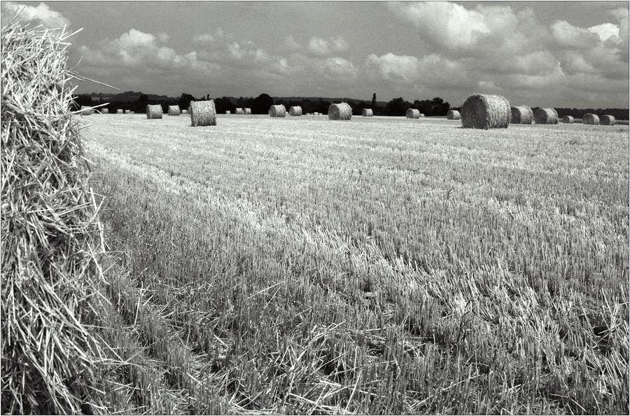 Chambois - Stalingrad der Normandie 2