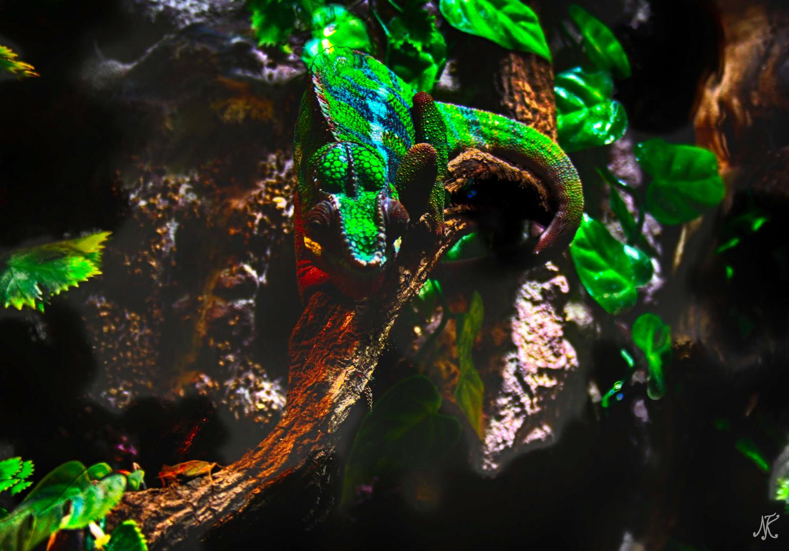 Chameleon Hanibal