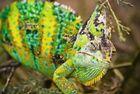 Chameleon Teil2