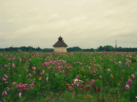 champ de fleur