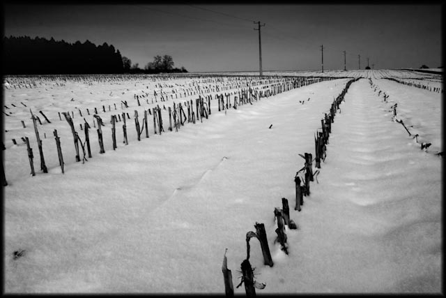 champ sous la neige