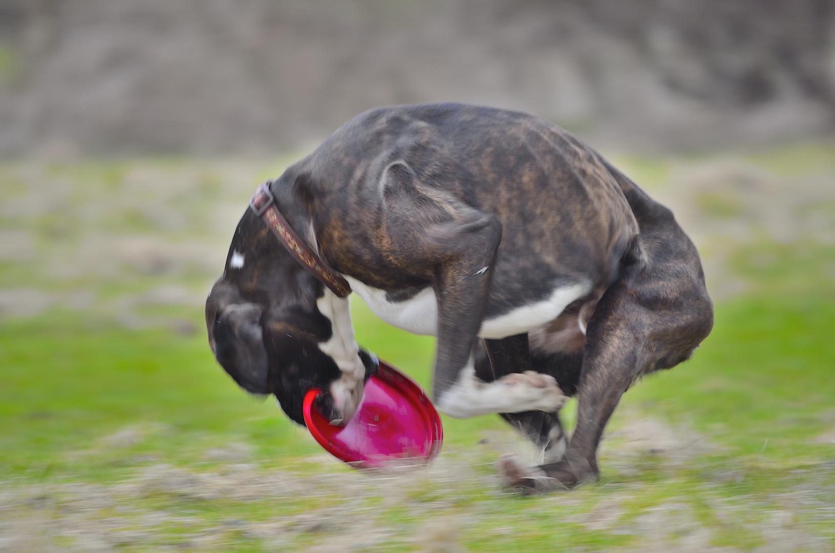 Champ Teil 3     Der Boxer war schneller......................