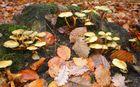 champignons 4