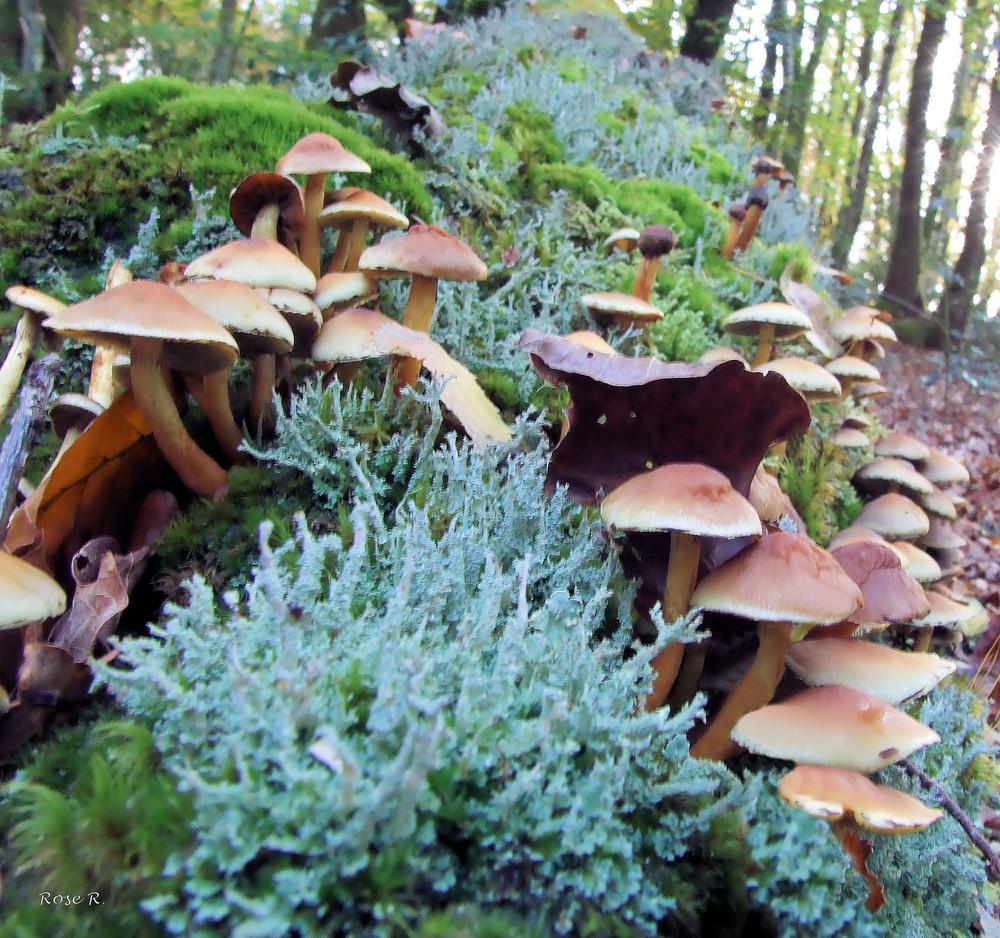 Champignons et lichen