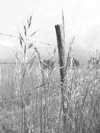 champs de chez moi
