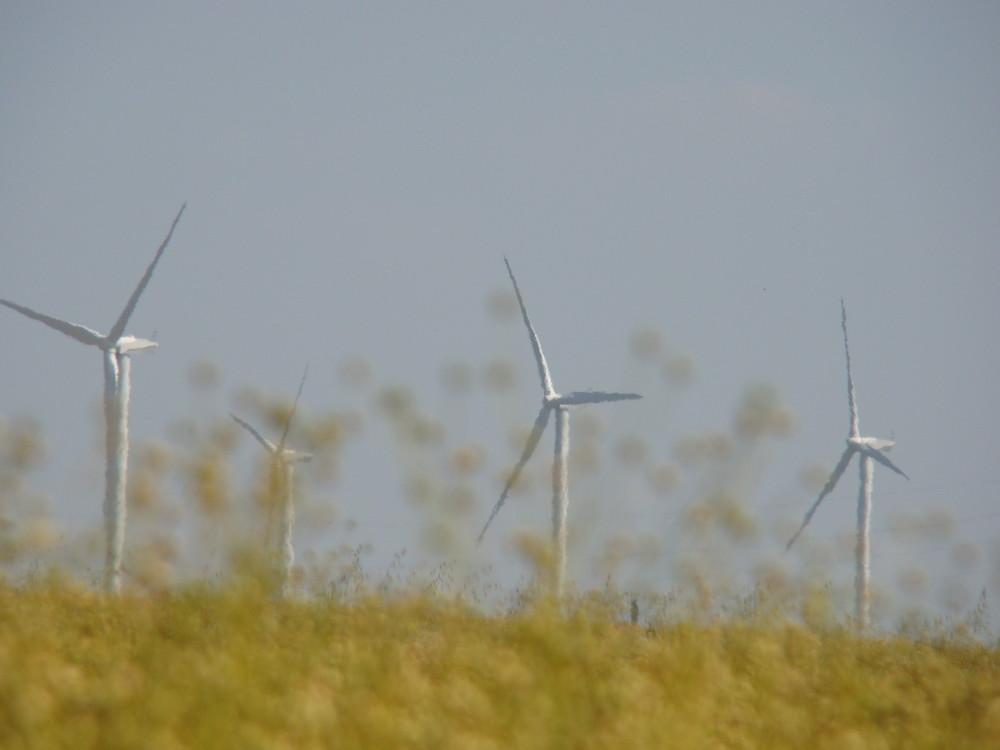 champs et éolienne