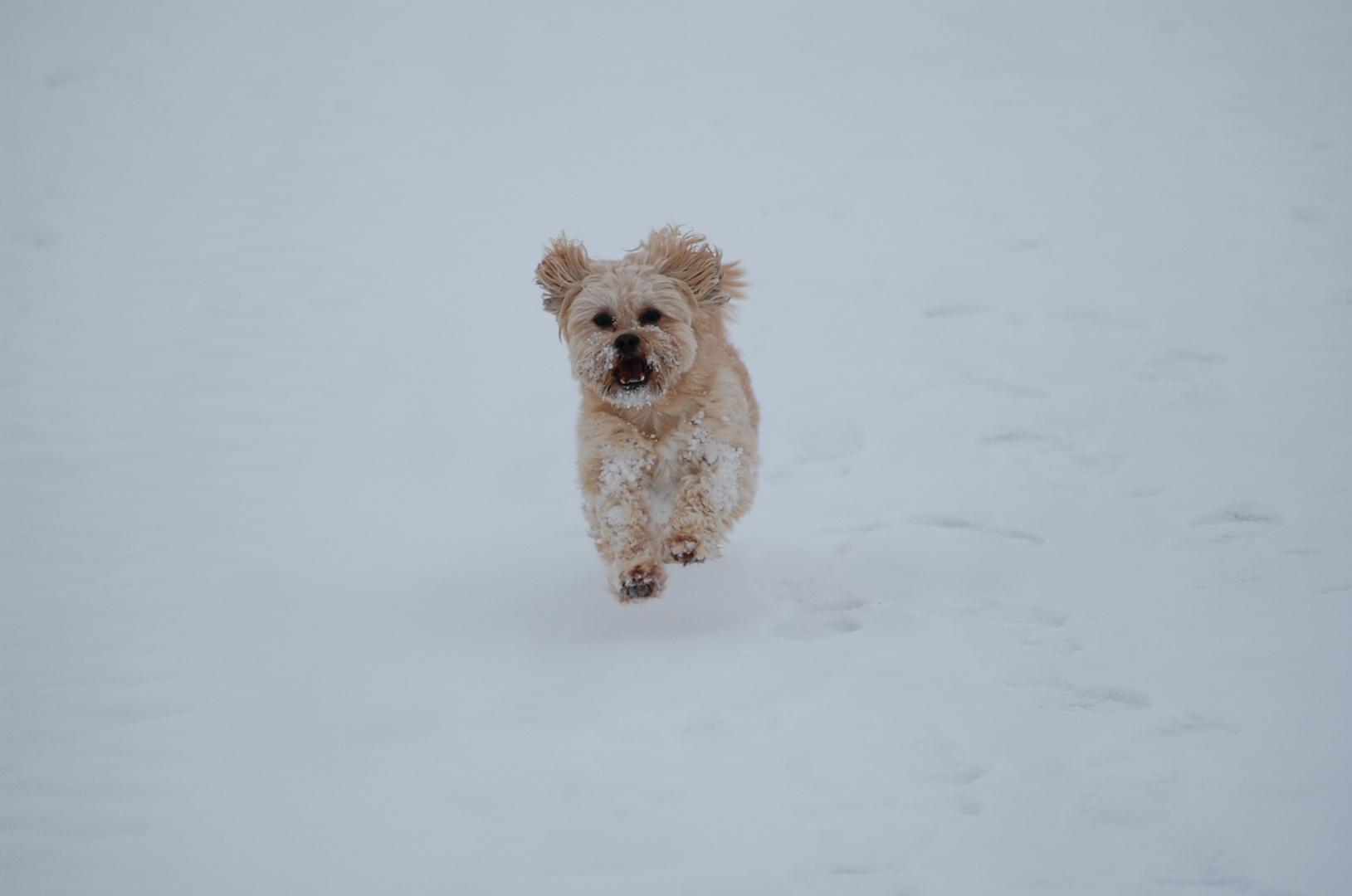 Champus findet diesne Winter toll (2010)