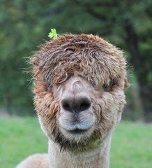 Chanel trägt immer den neuesten Alpakaschmuck :-)