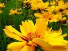 chant de fleurs