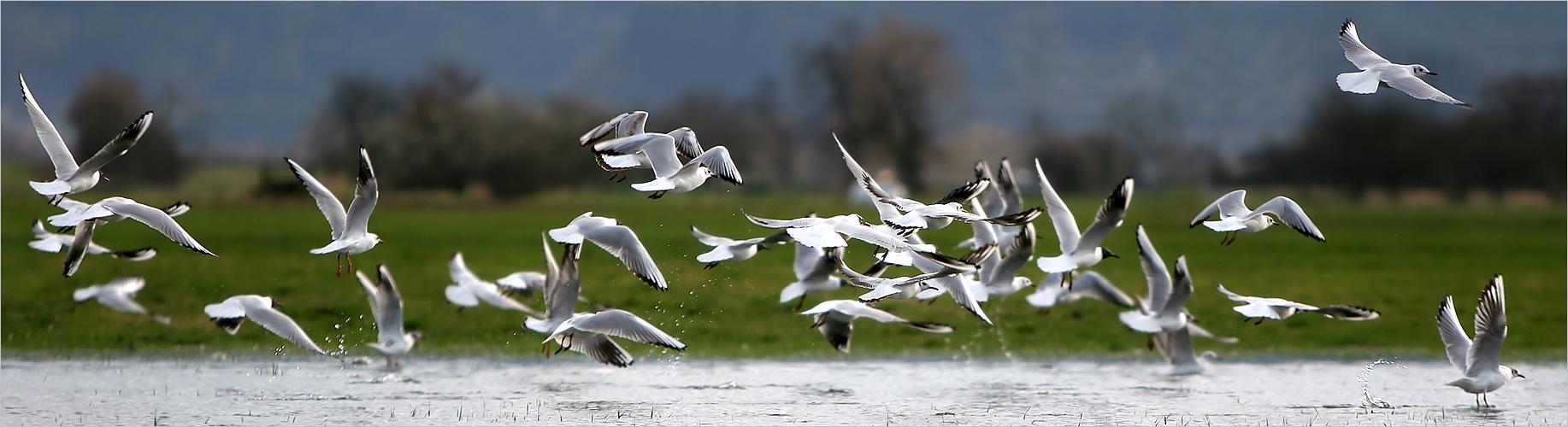 Chaotenvögel