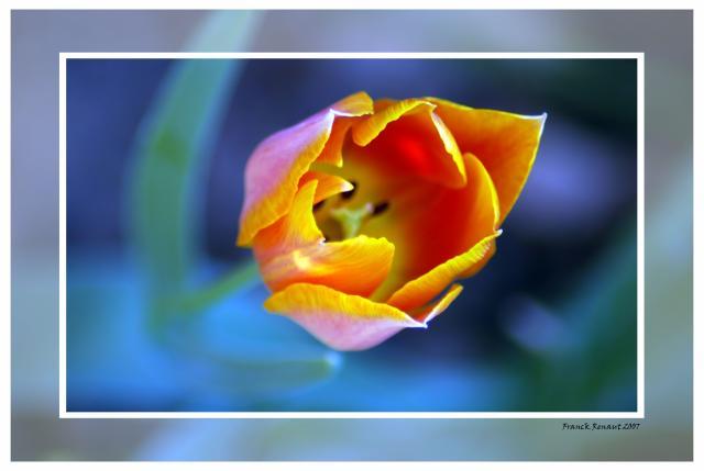 Chaque fleur attire sa mouche