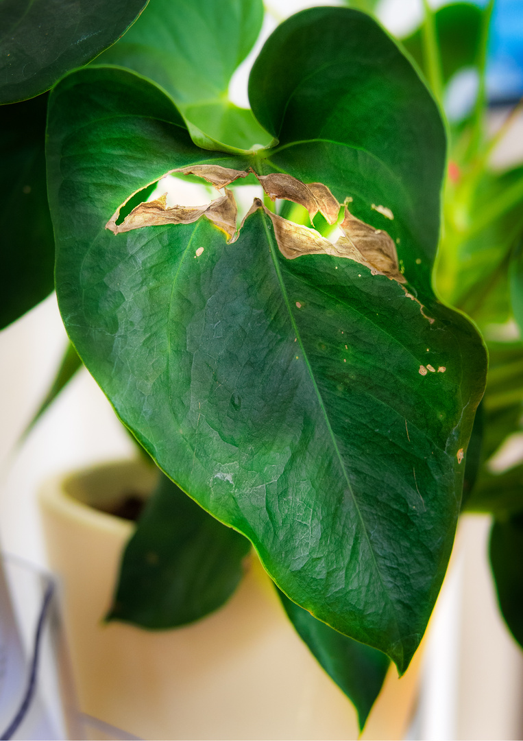 character.leaf